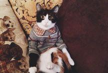 Şeftali / Benim kedim