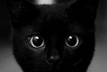 pets / by Kim Short