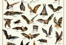Bats / by Heard Natural Science Museum & Wildlife Sanctuary