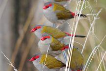 ** Love the Birdiess **