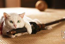 猫 / かわいい