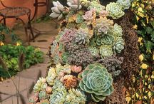 Photo de grands pots por le jardin