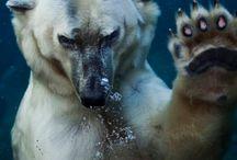 Animali foto strane
