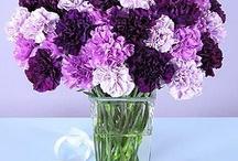 purple / by Cinderella Mckinsey