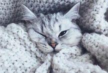 kitty inspiration