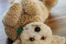 Goldendoodle / by Lisa Highfield