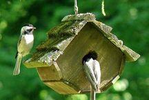 birds feeders / by Beni Johnson
