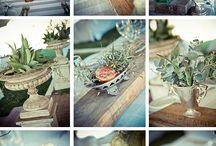 Garden ~ Succulents / by Jeana Green