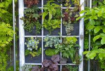 vertical gardening / by Kathryn O'Connell