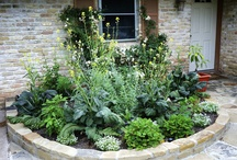 Front yard food garden / by Michelle @ Mint Green Apron