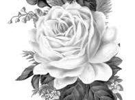 Roses - róże