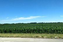 Instagram https://www.instagram.com/p/BVkFB7JjRX8/ June 20, 2017 at 09:52AM Cornfields forever.#indiana #prairie