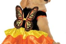 Halloween Costumes for pets / Let your #pet feel the Halloween spirit too!