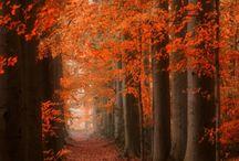 indian summer - autumn