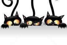 koty kats