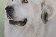 chien grand pyreneen / animaux