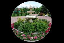 Spatii Verzi / Spatii verzi, gradini, parcuri si arhitectura peisagera. Tot ce trebuie sa stii despre amenajari de spatii verzi.