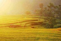 Banyuwangi Tourism / Banyuwangi Sunrise of Java