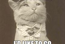 Katten Cats talk Miauw / kat met text Katten katten en nog eens katten Kotki Gatitos Katze Kittens Cats Chatze