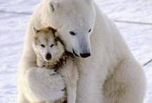 Interspecies love  / by Allison Lansberry