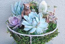 My Succulent Arrangement