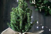 Rustic Christmas / Christmas nature's way