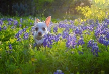 Furry Friends / by KVUE-TV