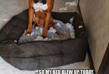 Funny animals / Haha these are funny