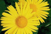 Kukat / Kukka
