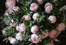 Festői virágok