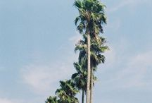 California / by Alexis Doherty