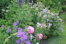 Niebieskie ogrody
