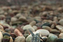 turtle♡