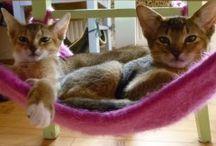 Gatos ♥ / cats