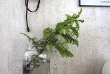plant idea's