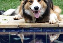 Border Collie - Toby o melhor cão do mundo!!!