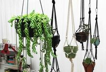 Plants Living Room