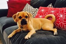Hank the Puggle - And friends / Puggles / by Mark