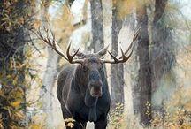 Wild Animal Pics
