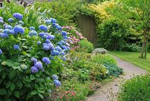 Gardens & Outdoors 1 / Garden