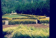 Centennial Vinyards Bowral - Our Wedding Venue / These are pictures of Centennial Vinyards Bowral... coming here honestly takes my breath away and my fiancé and I cannot wait to wed here in June 2016
