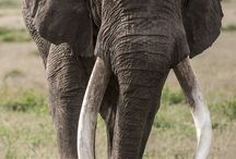 Elephants photos