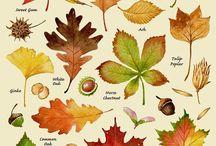 leaves and flowars
