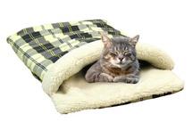 articole pisici