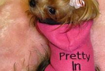 Puppy clothes