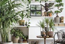 Rośliny / Pokój z roślinami