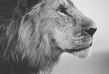 Wild animals / I prefer wild and free. Los prefiero salvajes y libres.
