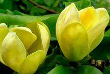 желто-белый сад