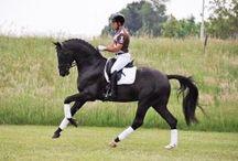 HORSE'S