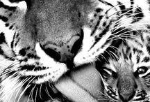 Løvee